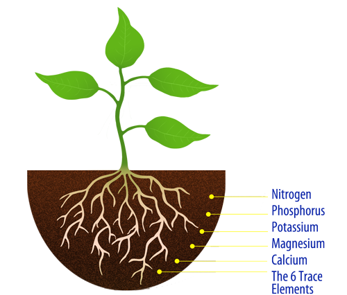 Nutrients from their environment: the air, soil, and water.