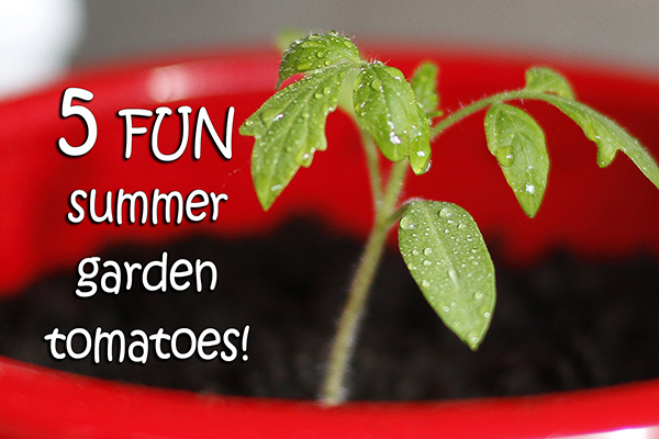 5 Fun Tomato Varieties for Your Summer Garden