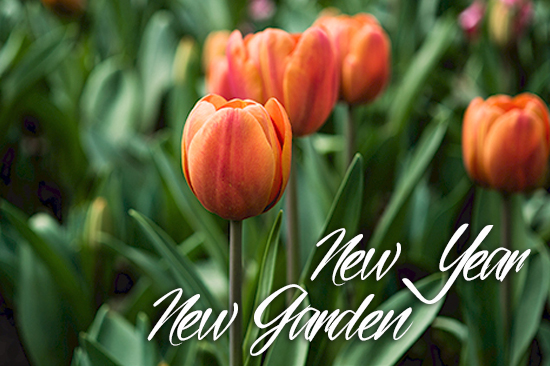 New year, new garden! Prep for your spring garden in January!