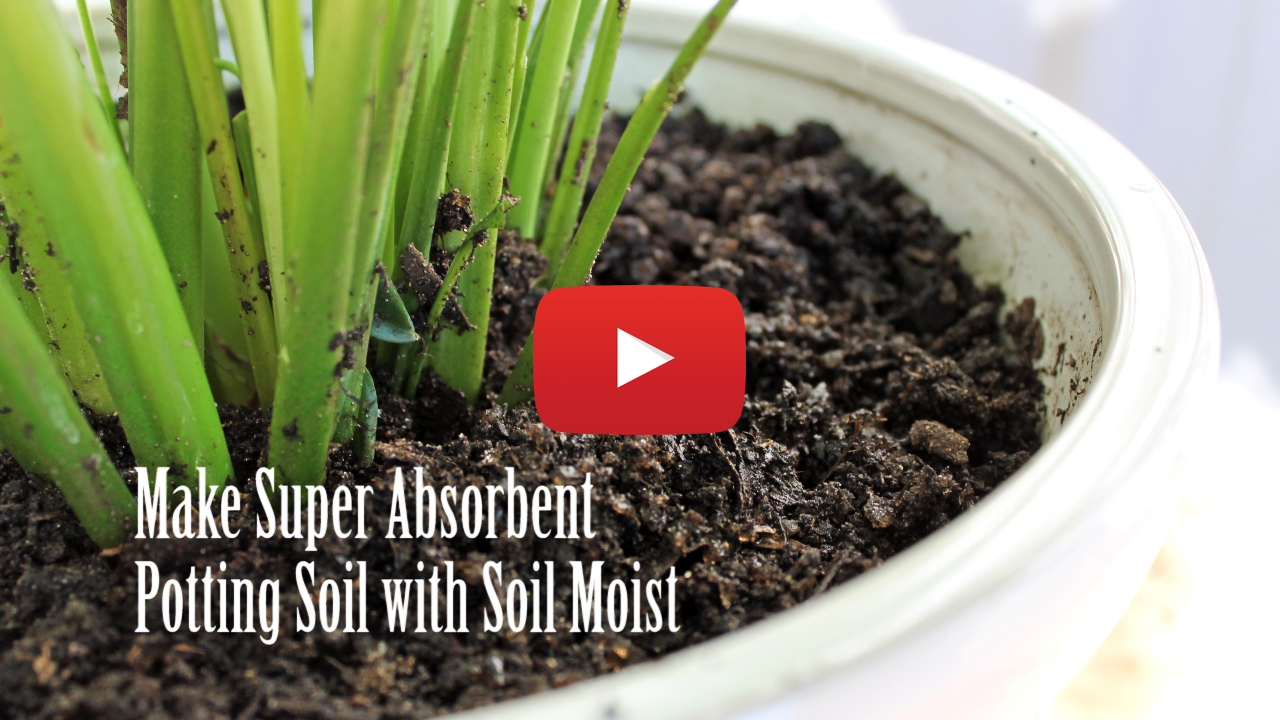 Soil Moist Crystal make super absorbant potting soil!