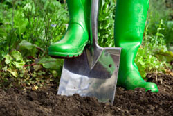 Step 2: Planting in your Vegetable Garden