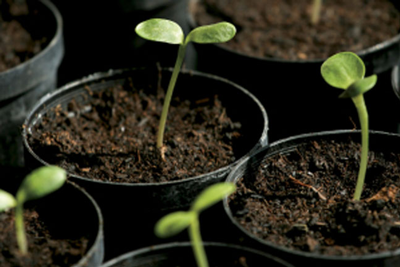 Sowing Starter Plants
