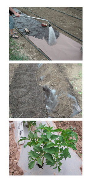 WeedgaurdPlus 100% Biodegradable Mulch
