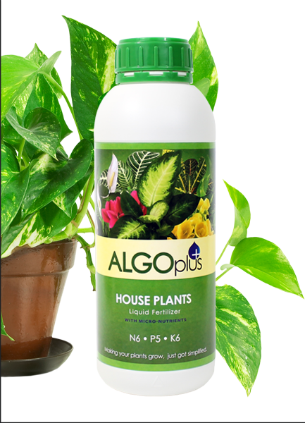 Algoplus House Plants Fertilizer